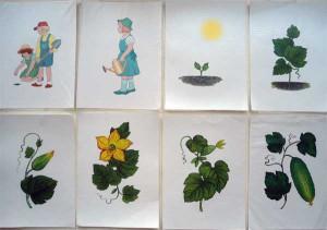 Схема рассказа Как появляется растение