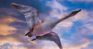 Конспект открытого занятия в подготовительной группе по теме «Птицы весной»