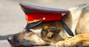 Конспект логопедического занятия «Пересказ рассказа Л. Белоусовой  «Пес Полкан»