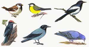 Лексическая тема: «Зимующие птицы»