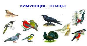 Конспект логопедического занятия «Зимующие птицы. Звук М»