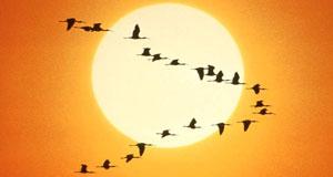 Конспект занятия «Перелетные птицы»