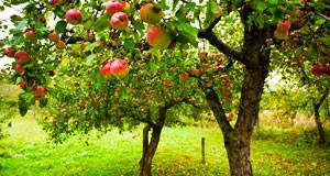 Логопедическое панно «Яблоня»