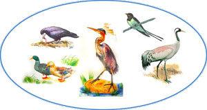 Лексическая тема: «Перелетные птицы»